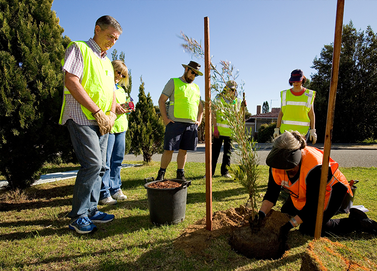 community tree planting program city of stirling